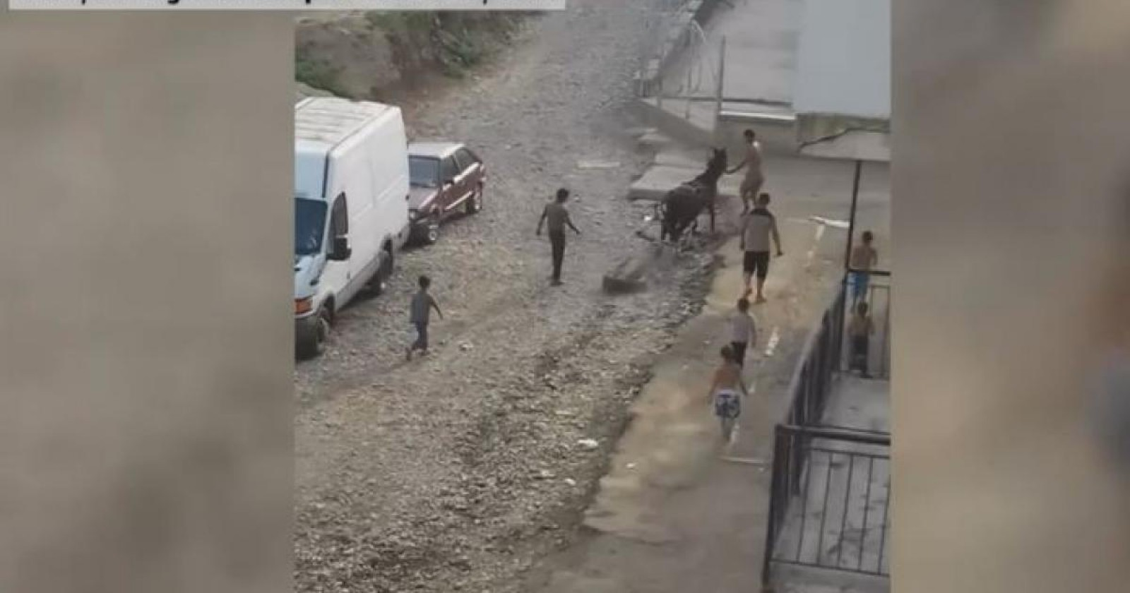 (video) Cal bătut cu bestialitate pentru că nu putea căra o bucată de beton