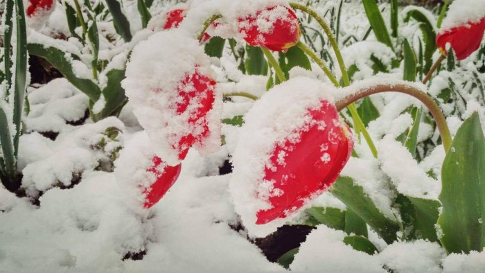 (video) Pentru unii - bătaie de cap, pentru alții - motiv de bucurie. Cum a reacționat fiica lui Adrian Ursu la vederea zăpezii