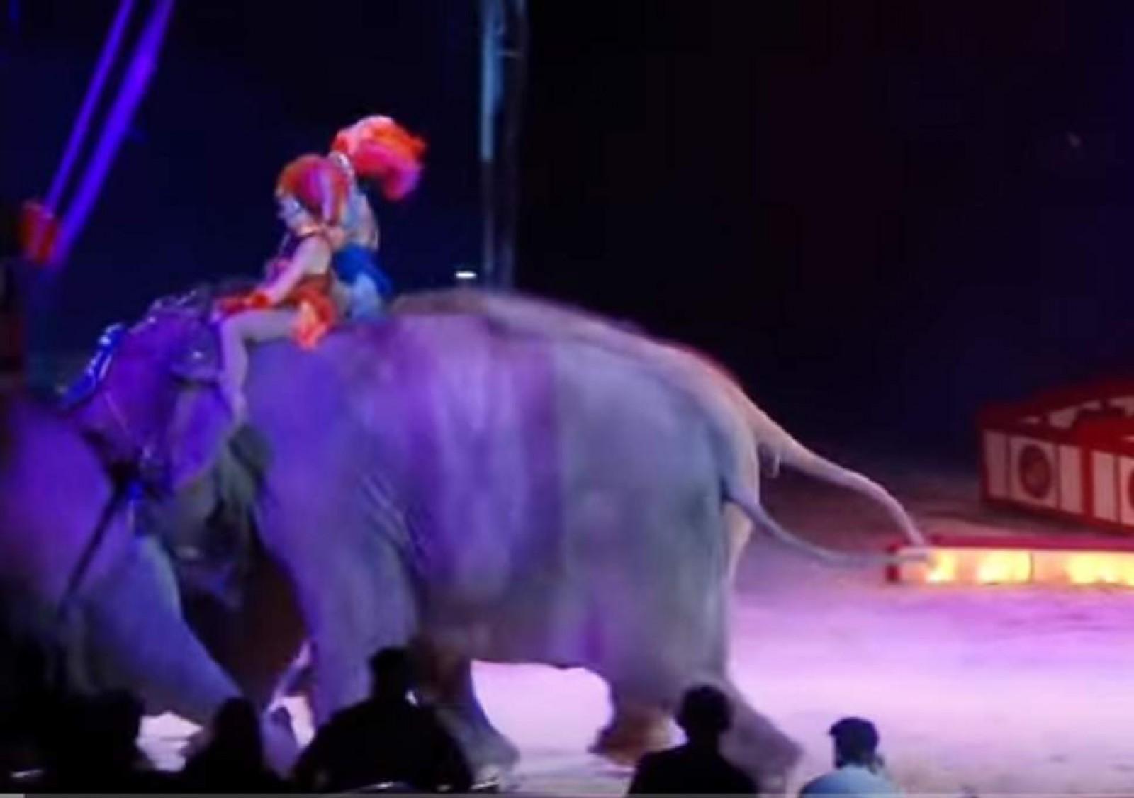 (video) Un elefant a căzut peste public, în timpul unui spectacol de la un circ din Germania