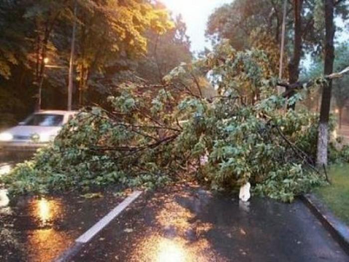 Situația în țară până la 8 dimineața: 79 de localități au rămas fără curent electric, iar zeci de copaci au fost doborâți