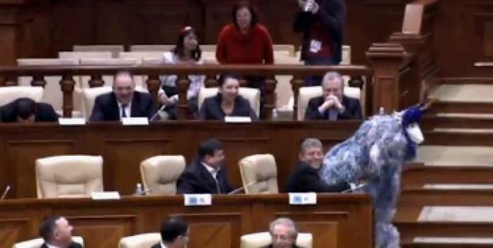 (video) Stop cadru: Capra din Parlament