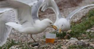 """Situație neobișnuită. Pescăruşii s-au """"îmbătat"""", după ce au băut alcoolul abandonat pe plajele din Marea Britanie"""